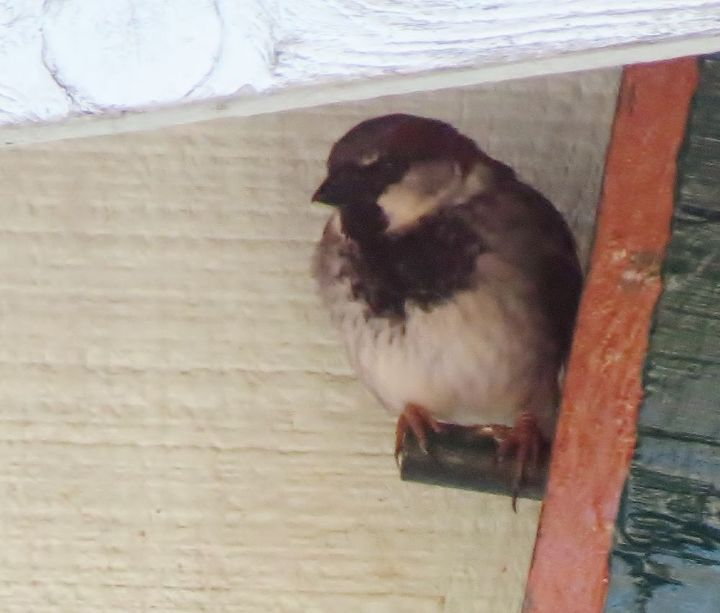 One of the birds that actually nested in the little box house we have under the eaves.