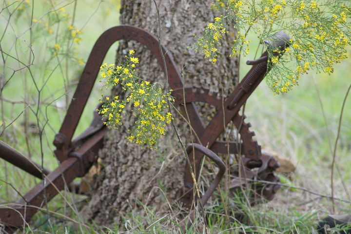 fall photos in oklahoma, outdoor living, ponds water features, The front part of the two row cultivator that went on Granddad s old 1938 F14 Farmall tractor that was parked years ago and the tree is about to take it in Two owners since the family and they never moved it