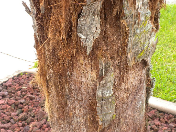 Palm Tree Is Shedding The Bark What To Do Hometalk