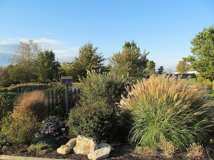 "the grass on the right is Miscanthus ""Huron Sunrise"""
