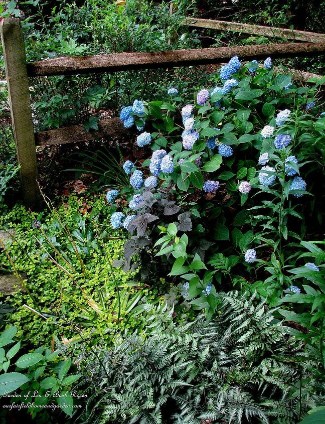 Shady plantings by the back fence