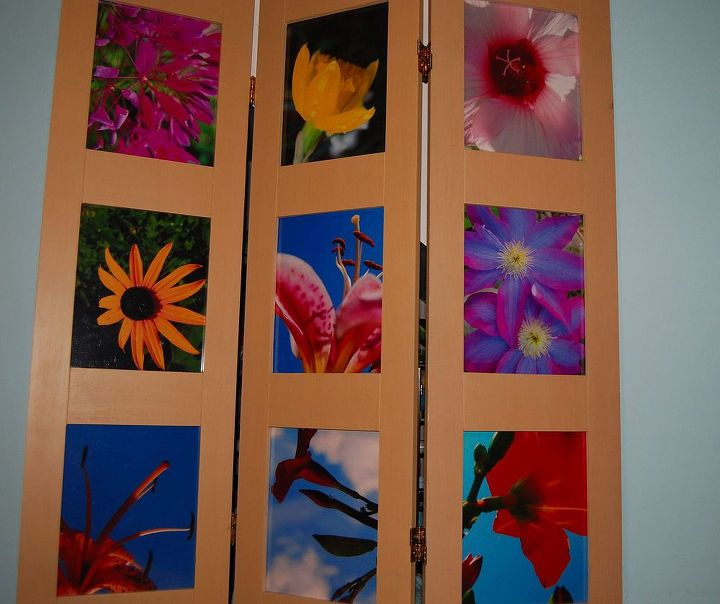 8x10 closeups bring out the vibrant colors and contrasting backgrounds