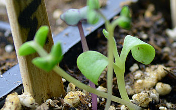 how to care for your seedlings four essential elements for healthy growth, gardening, First let me offer my congratulations and welcome you to the club of indoor seed growers The enjoyment of watching a plant grow from one tiny seed to a thriving healthy beautiful plant is tremendous