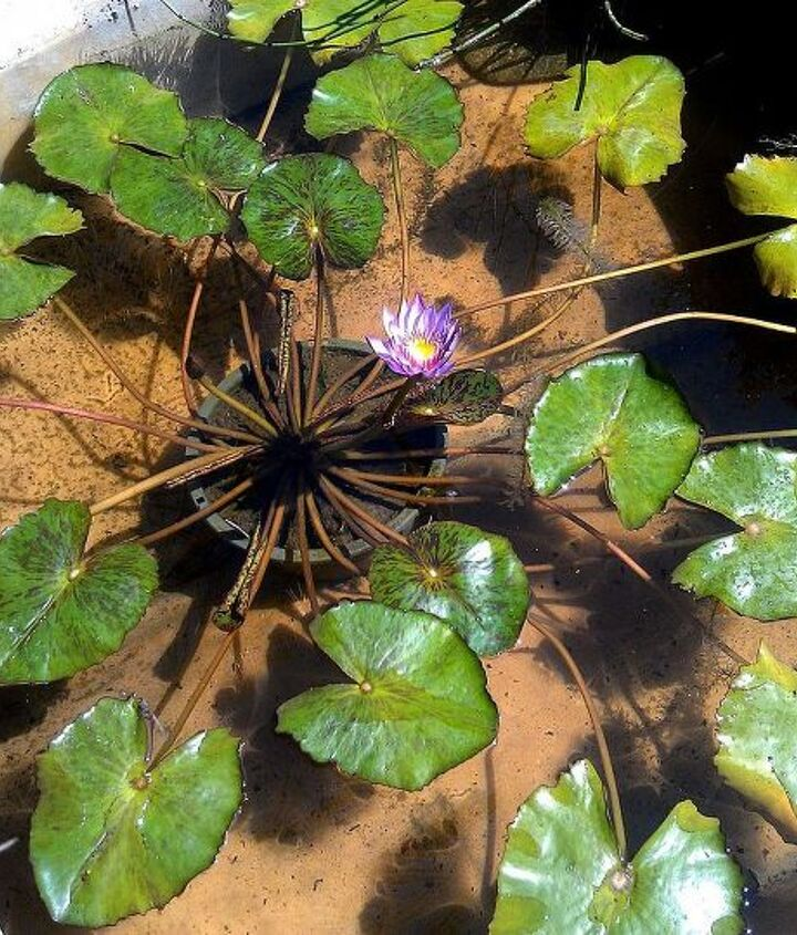 The lily pads spread out and covered the entire four foot width of the boat.