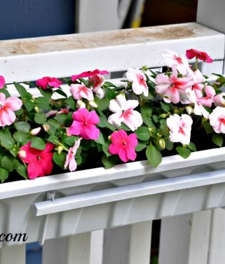 These impatiens were waiting to show off their stuff!