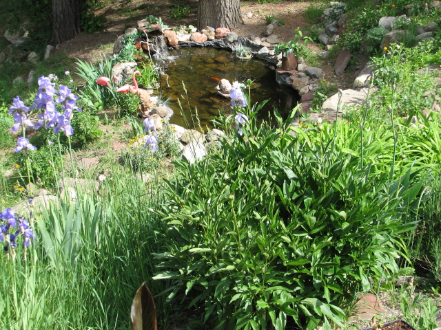 This is view from our deck and sun room to the pond now. Moving all that rock was not easy and even harder was to establish a good eco system for plants and fish.