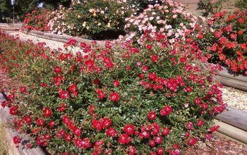 Three Tier Roses