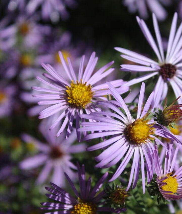 fall blooming plants, gardening