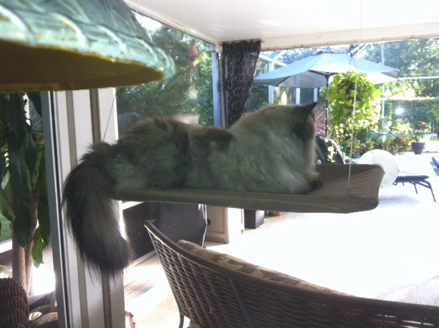 crissy enjoying her morning on her perch watching the squirrels in the trees, pets animals