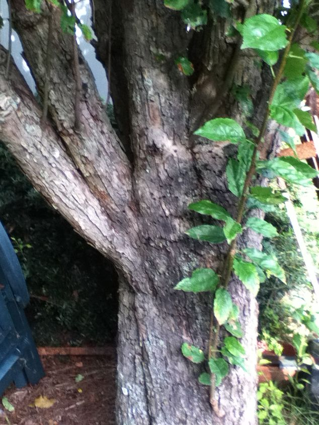 can anyone identify this tree i would appreciate it it is located very close to, gardening, 4 same tree