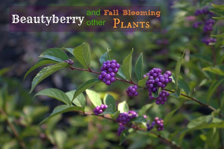 fall blooming plants, gardening