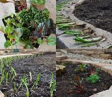 creating a xeriscape backyard landscape, gardening, landscape, We even managed to plant a few onions and greens