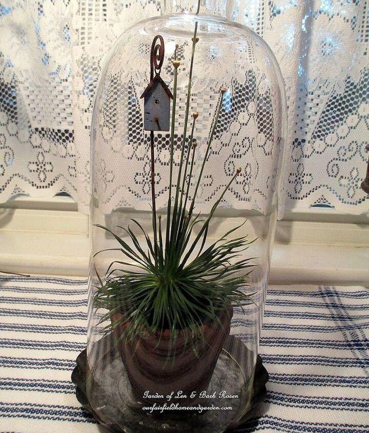 delicate Chrysanthus & birdhouse under a lamp glass cloche http://pinterest.com/barbrosen/