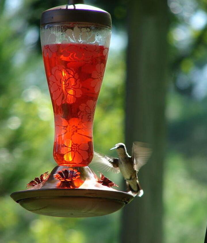 gardening hummingbirds butterflies, gardening, pets animals