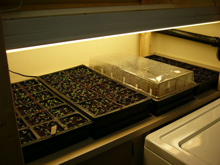 how to grow seeds indoors, gardening, Plastic trays and clear domes The reason some are covered and others are not is because different seeds were started at different times