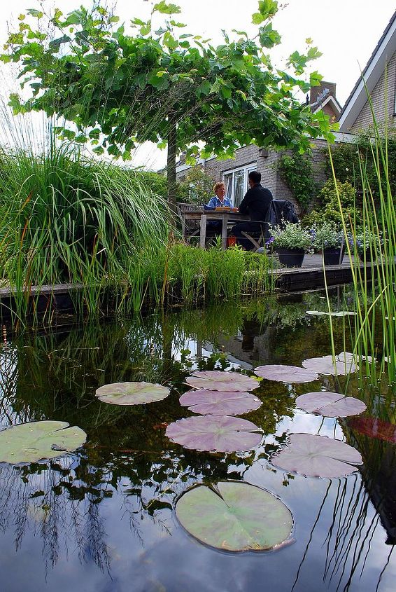 So much life in your garden with a pond like this one. Lots of fish and waterinsects.