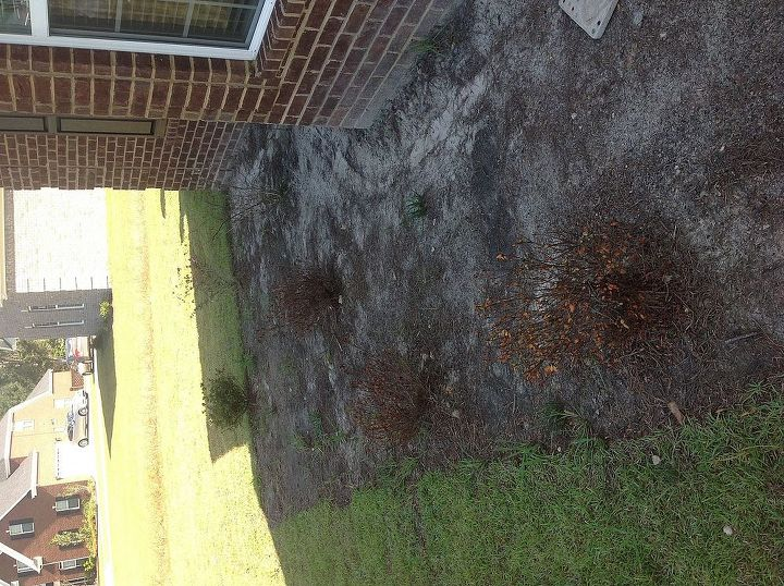 bought new house and shrubs builder put in are dying, gardening