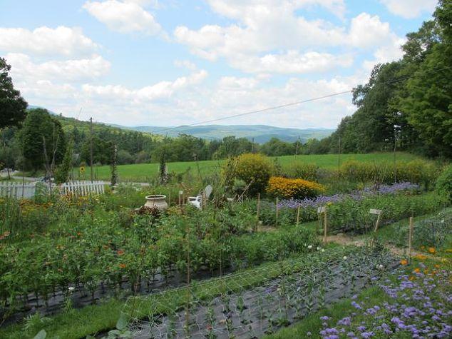 The Song Garden Cutting Garden   Hometalk