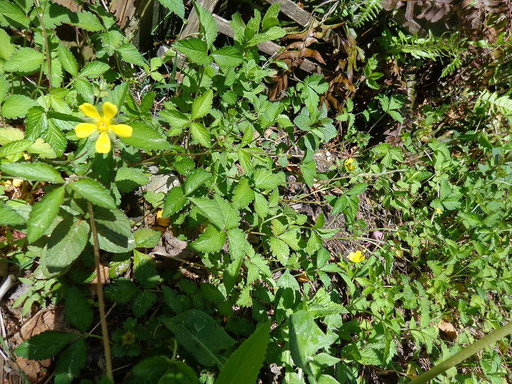 name these plants, flowers, gardening, Tiny yellow flower