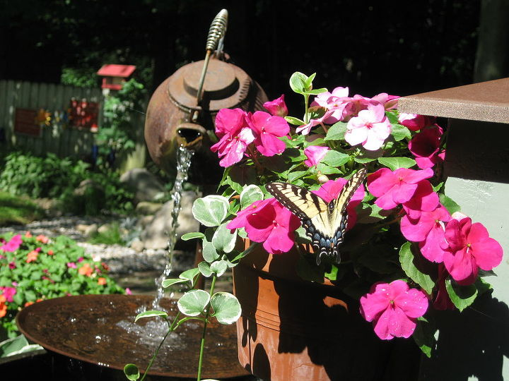 tea pot butterfly, flowers, gardening, Butterfly stops for a refreshing drink