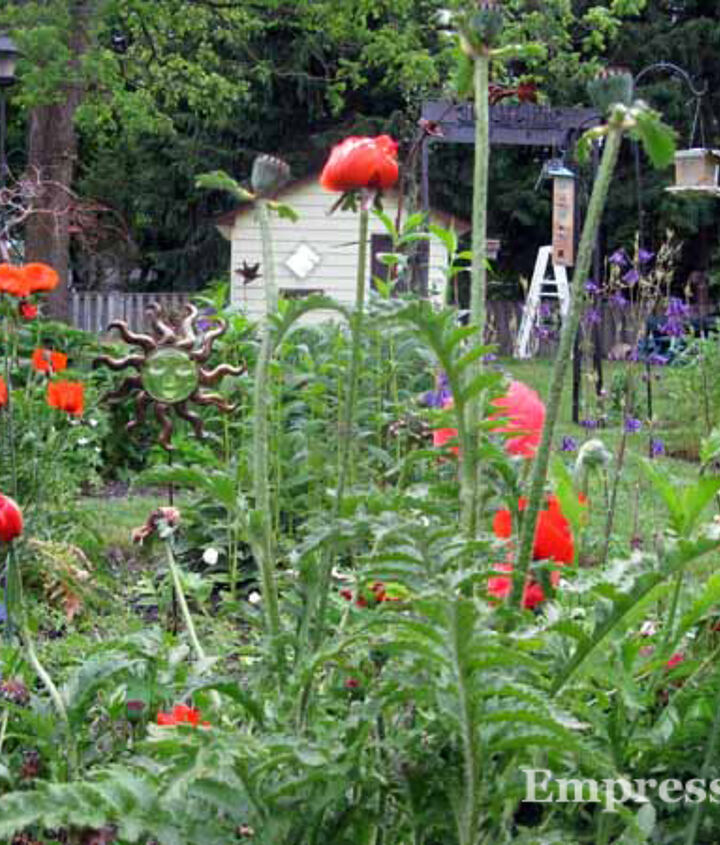 I love the giant poppies but they sprawl so wide they can smother the plants around them.