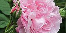 romancing the garden, flowers, gardening