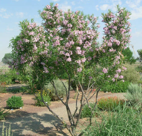 What types of plants and trees grow well in arizona in fall winter what types of plants and trees grow well in arizona in fall winter flowers mightylinksfo