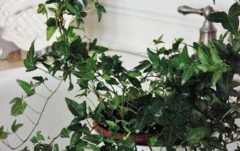 The Secret to a Beautiful Houseplant