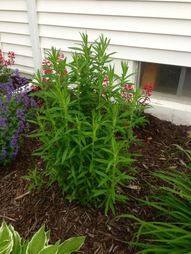 weed or plant, flowers, gardening