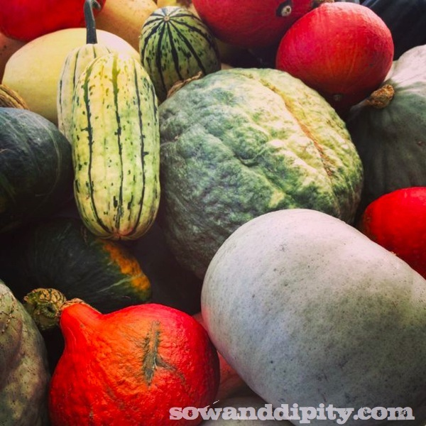 These heirloom squashes were found at a local nursery, look at the fab colors and textures!