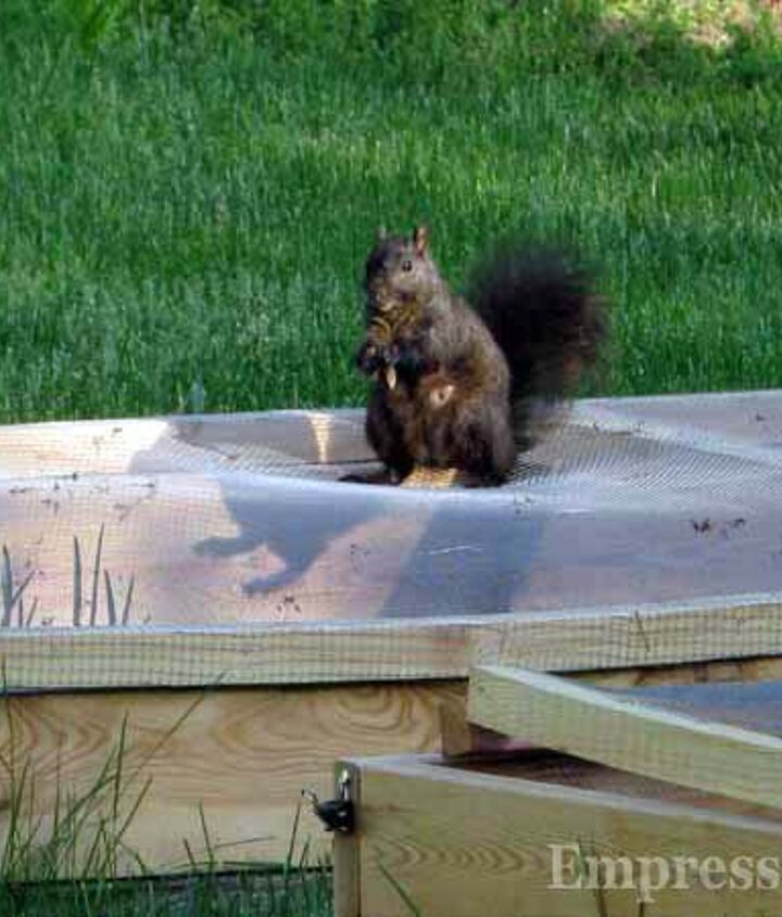 The squirrels can't dig in the bed anymore (hee hee) but sun and rain still get through as needed.