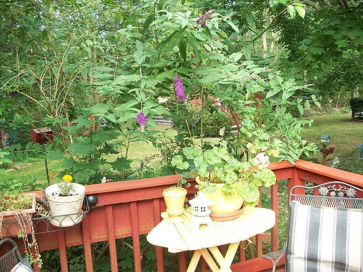 butterfly bush in bloom over back deck, decks, gardening, outdoor living