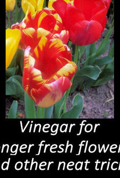 use vinegar for long lasting cut flowers and so much more, flowers, gardening