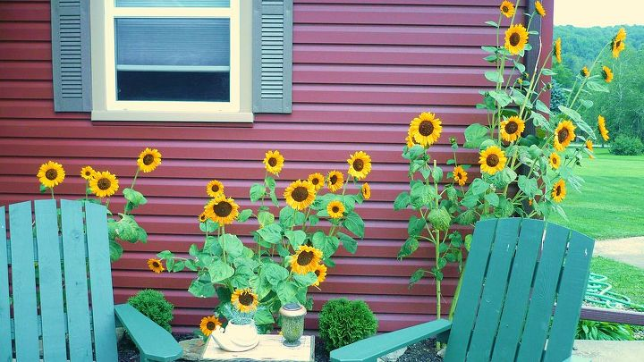 sunflowers make make me smile, flowers, gardening