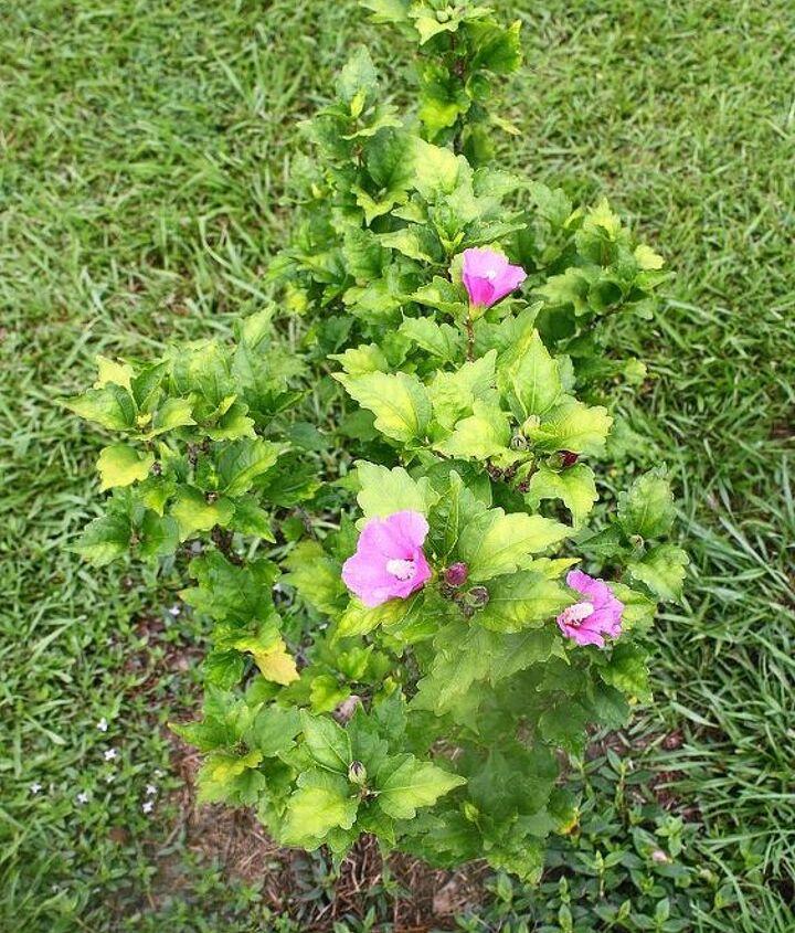 another gardening question, flowers, gardening