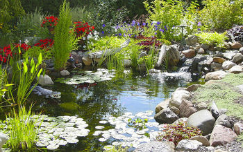 6 tips for designing and installing a water garden or fish pond, gardening, home decor, outdoor living, ponds water features, Tip 3 ecosystem provide a balanced ecosystem for your pond with the addition of plants and fish Aquatic plants will take the nutrients out of the water that algae compete for and the fish will fertilize the plants
