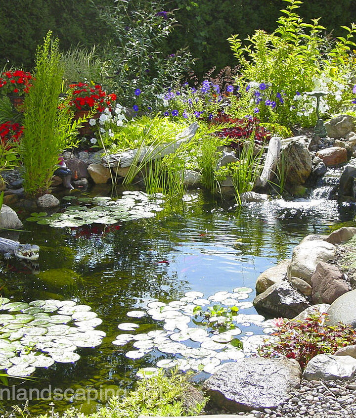 Tip #3 ecosystem: provide a balanced ecosystem for your pond with the addition of plants and fish. Aquatic plants will take the nutrients out of the water that algae compete for and the fish will fertilize the plants!