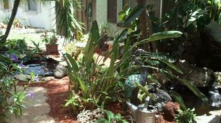 q koi pond care, outdoor living, ponds water features, Ft yard garden view continuous work in Florida