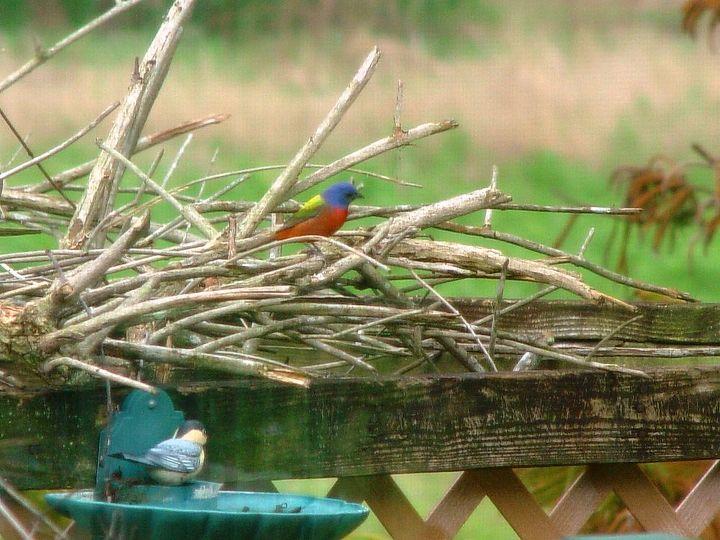 wildlife bird, wildlife animals