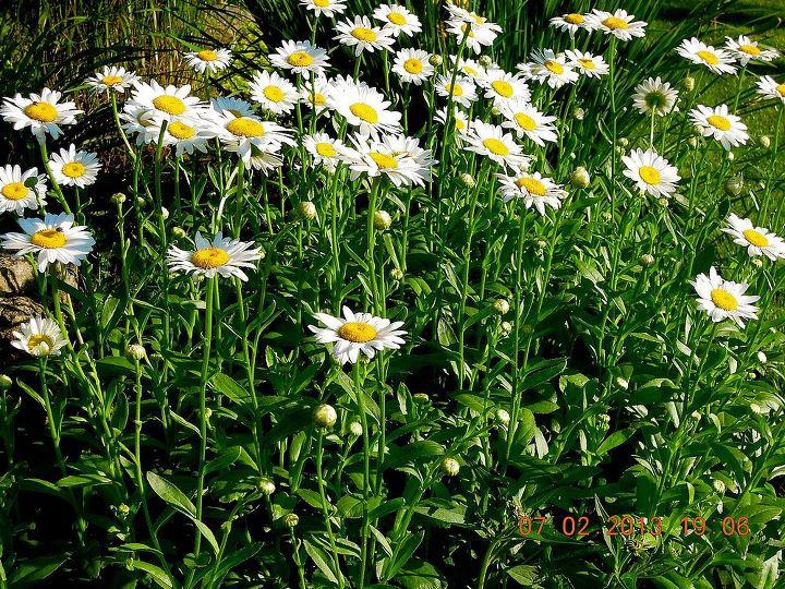 blooms in my gardens, gardening