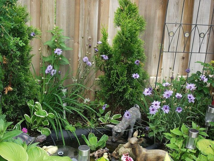 my gardens, flowers, gardening, hibiscus, Small pond with deer and frogs and turtle and ducks Rocks and lime green apple scented hosta around it