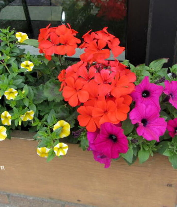 From the right petunia, geranium, verbena, and million bells.