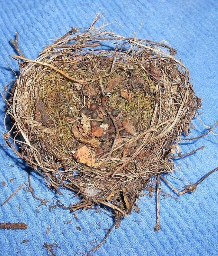 2nd pic same nest