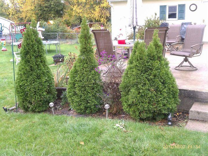 fall gardens amp need help with my azalea, flowers, gardening
