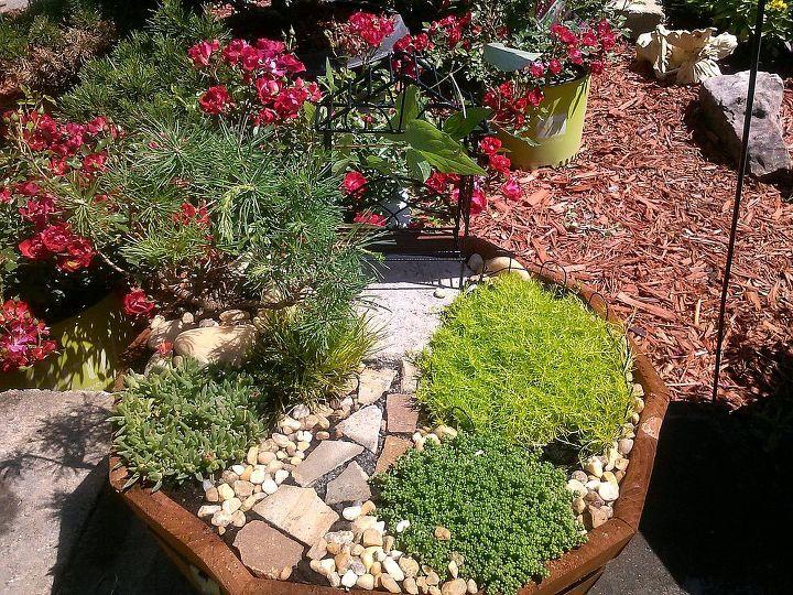 Fairy type pot, minimalist with Irish moss, Ice plant, Mugo Pine, dwarf acorus and a dwarf sedum