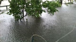 , That was my back yard early in the day taken from an upstairs window Just the top of the trees are above the water All of my flower gardens are aquatic there LOL