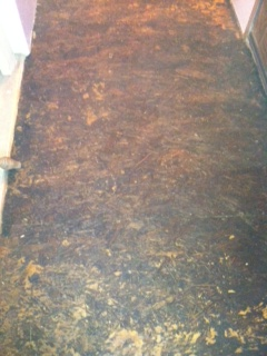 particle board floor turned into a stone granite floor, concrete masonry, diy renovations projects, flooring