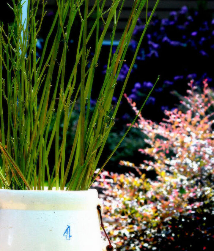 how i turned spent daylily stems into pretty outdoor decor, container gardening, flowers, gardening
