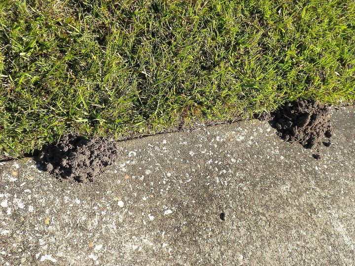 hi found these mounds this morning any idea who or what made them and should we be, pest control