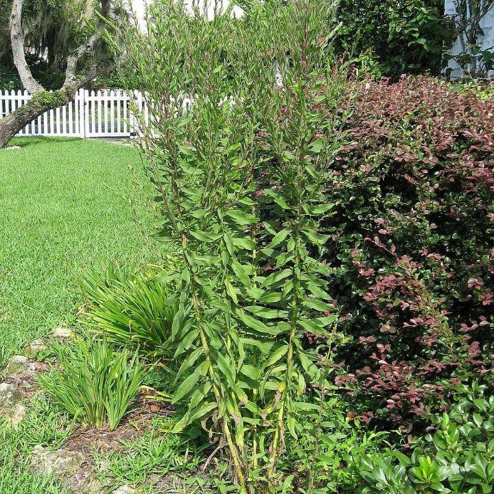 gardening plant identification please, gardening